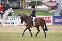 Champion Junior Rider 14 U18