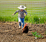 Ethan chasing the rooster out of the garden, San Luis Obispo, California