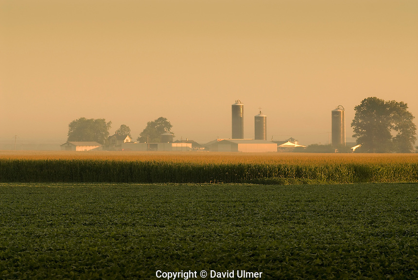 Silos break the skyline above tasselled corn and field of soybeans.