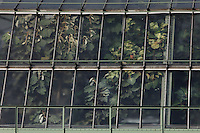 Tropical Rainforest Glasshouse (formerly Le Jardin d'Hiver or Winter Gardens), 1936, René Berger, Jardin des Plantes, Museum National d'Histoire Naturelle, Paris, France. View from the side of windows of the glass and metal structure showing the luxuriant and invasive foliage within.