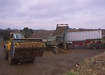 A3AAXB Sugar beet being loaded by tractor onto lorry trailer for transport