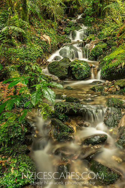 Pure water of rainforest stream, Westland National Park, West Coast, World Heritage, New Zealand