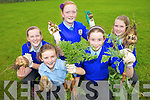 VEGGIES: Maeve Scanlon, Audrey Lacey, Debbie O'Sullivan, Sarah Jane Courtney and Ciana Lynch checking out the produce from the vegetable garden at Asdee national school.