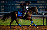 OCT 24: Eight Rings gallops at Santa Anita Park in Arcadia, California on Oct 24, 2019. Evers/Eclipse Sportswire/Breeders' Cup