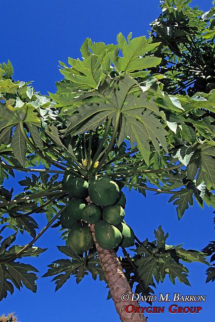 Fruit Tree
