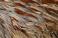 Close up of pheasant feathers.