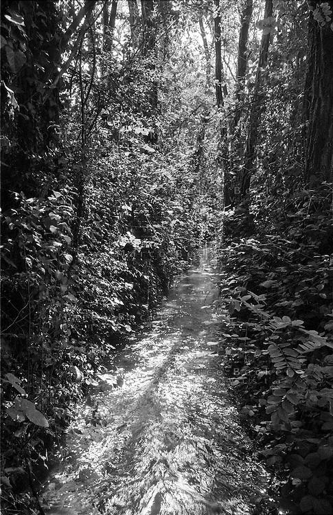 Castellazzo di Bollate (Milano), Parco delle Groane. Torrente, ruscello --- Castellazzo di Bollate (Milan). Regional park Parco delle Groane. Creek, stream