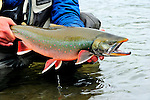 Fly Fishing in Reel Action, Alaska