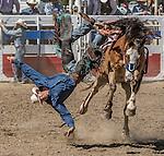 Oakdale Rodeo 2015
