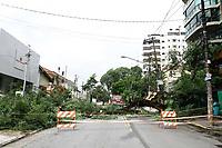 26.02.2019 - Queda de árvore na rua Traipu em SP