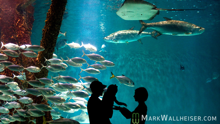 A young family enjoy the Gulf of Mexico tank at the Audubon Aquarium of the Americas in New Orleans, LA August 21, 2009.   (Mark Wallheiser/TallahasseeStock.com)