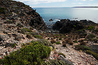 The rough coastline at Black Point, Kangaroo Island