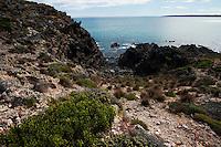 The rough coastline at Black Point, Kangaroo Island