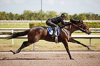 #86.Fasig-Tipton Florida Sale,Under Tack Show. Palm Meadows Florida 03-23-2012 Arron Haggart/Eclipse Sportswire.
