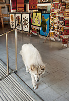 A dog roams in the showroom of Casa Santiago in Teotitlán del Valle, Oaxaca, in Mexico, Tuesday, April 10, 2012. ..Photo by Matt Nager