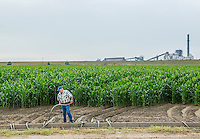 Harold Griffith works with siphon tubes on his irrigated corn field near the Xcel Energy Pawnee Generating Station in Fort Morgan, Colorado, Tuesday, July 21, 2015.<br /> <br /> Photo by Matt Nager