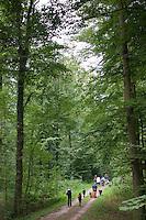 Kinder im Wald, Kinder erleben die Natur im Wald, Walderlebnistag, Schulkinder bei einer Waldexkursion, Exkursion, Grundschulklasse, Schulklasse, Waldweg, Spaziergang, Waldspaziergang