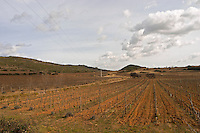 Domaine de Canet-Valette Cessenon-sur-Orb St Chinian. Languedoc. The vineyard. France. Europe.