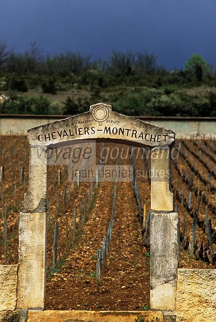 Europe/France/Bourgogne/21/Côte d'Or/Montrachet: vignoble AOC Montrachet