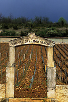 Europe/France/Bourgogne/21/Côte d'Or/Montrachet : vignoble AOC Montrachet