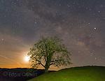Milky Way, Coastal Live Oak, Los Padres National Forest, Big Sur, Monterey County, California