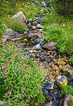 Wind River Range, WY: A small stream with mounds of pink monkeyflower (mimulus lewisii), Popo Agie Wilderness; Shoshone National Forest
