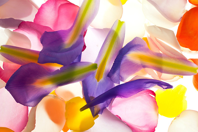 A composition of rose and iris petals