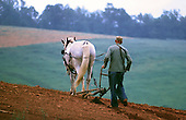 Old farmer with horse and plow