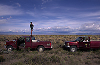 Researchers track sage grouse on flat brush-covered BLM land, the habitat most desired by the sage grouse on western lands. Sage grouse chicks have a mortality rate of 75% in the first two weeks of life, so University of Idaho researchers are checking nesting sites of two hens fitted with transmitters.  ....Sage grouse once numbered two million birds, But today there is only a breeding population of 15,000 to 30,000 birds--only 5-10,000 in the Upper Snake River. ....Momentum is building to list the sage grouse under the federal Endangered Species Act. Many predict the effort will result in an environmental battle to match the spotted owl/logging debate. The most serious threats to sage grouse habitat are range fires, farming and livestock grazing.