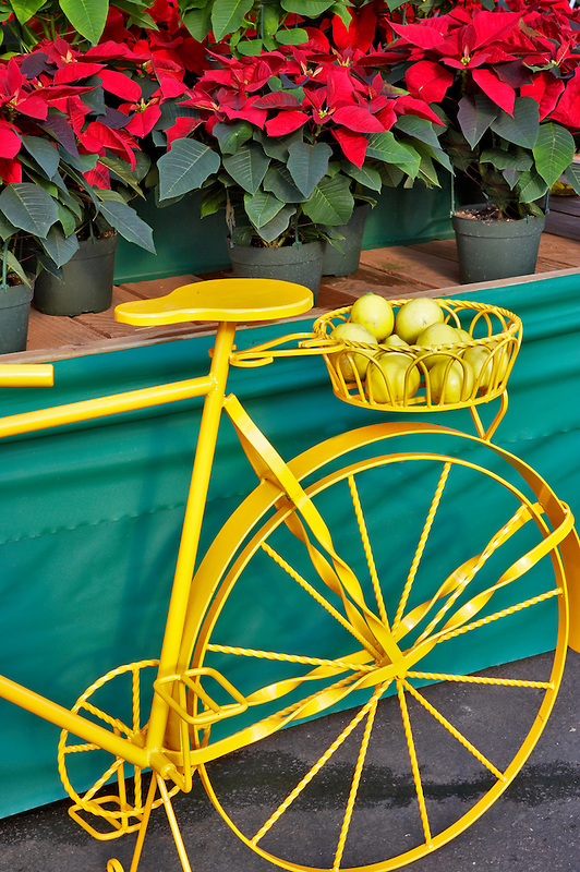 Yellow bike with poinsetias. Al's Nursery. Woodburn. Oregon