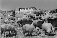 Mascara Area, Algeria, Summer 1961. Typical French Fort for a small harka unit. A school was builted for the village children. Only one kid had to keep the sheep herd and was very dissapointed.