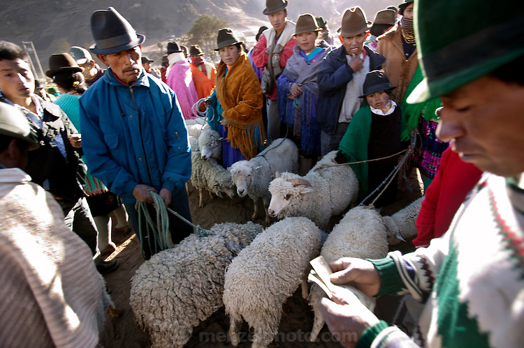 Selling sheep at a livestock market in rural Ecuador to raise money to buy food for the family.  (From the book What I Eat: Around the World in 80 Diets.)