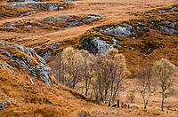 Autumn Scottish Highlands