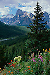 Banff National Park, Canada<br /> Fireweed, paintbrush, and cow-parsnip on a ridge above The Valley of the Ten Peaks, Moraine Creek and Mount Babel with Wenkchemna Peaks