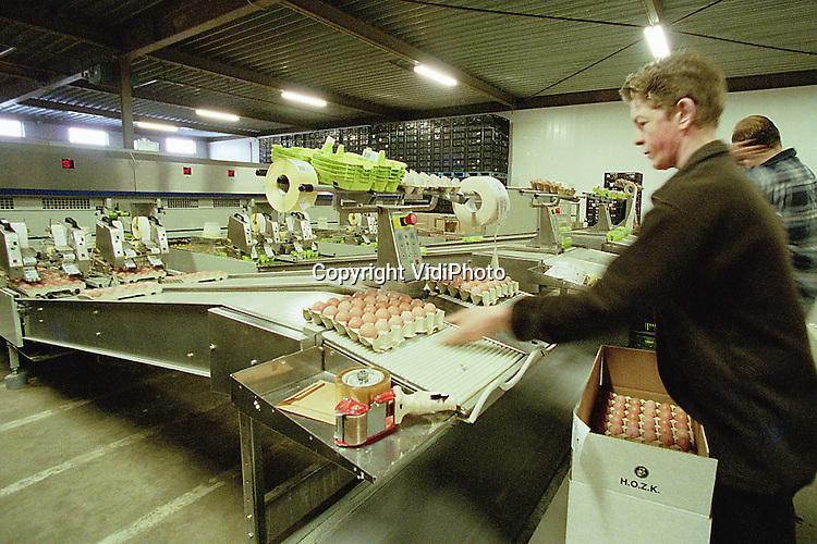 Foto: VidiPhoto..BARNEVELD - De eierpakstations van Kwetters, met vestigingen in onder meer Barneveld en Veen, hebben de meest moderne eiersorteermachine van Nederland in gebruik genomen. Hierdoor is het mogelijk de kwaliteit van de eieren flink op te krikken. De machine is een uitvinding van Moba in Barneveld en kan in zijn meeste eenvoudige vorm 60.000 eieren per uur verwerken. Het is de eerste sorteermachine met een kleuren- en vuildetector voor zowel witte als bruine eieren. Bovendien kunnen kapotte eieren de andere exemplaren door een vernuftig rollensysteem niet meer bevuilen. Bij de stations van Kwetters worden per week 22 miljoen eieren verwerkt..