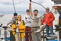 King salmon charter fishing from a small charter vessel in Sitka, Alaska.