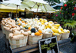Different varieties of squash on sale at a farm stand in East Hampton, Long Island, New York State, United States of America, North America