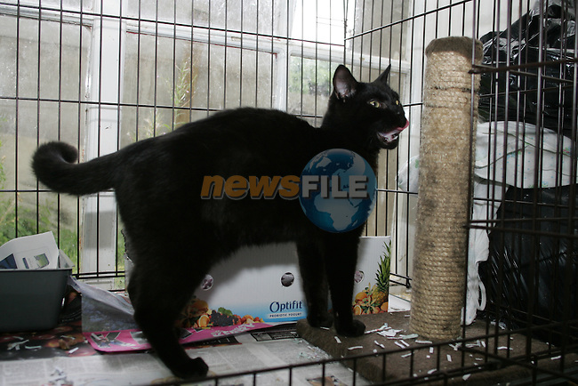 Salem in Drogheda Animal Rescue, Scholes Lane...Photo NEWSFILE/Jenny Matthews.(Photo credit should read Jenny Matthews/NEWSFILE)....This Picture has been sent you under the condtions enclosed by:.Newsfile Ltd..The Studio,.Millmount Abbey,.Drogheda,.Co Meath..Ireland..Tel: +353(0)41-9871240.Fax: +353(0)41-9871260.GSM: +353(0)86-2500958.email: pictures@newsfile.ie.www.newsfile.ie.FTP: 193.120.102.198.