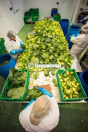 Inspiral, supplier of organic vegetarian food, North London UK