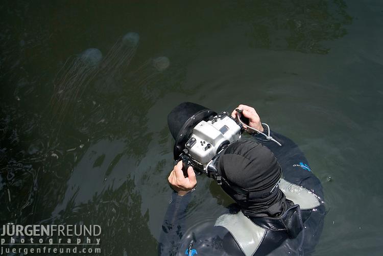 Jurgen Freund photographing box jellyfish in the mangroves