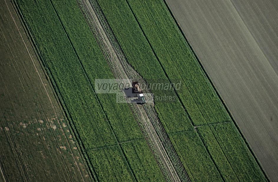Europe/France/Normandie/Basse-Normandie/50/Manche/Baie du Mont Saint-Michel: Cultures dans les polders -  Vue aérienne