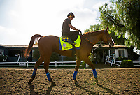 ARCADIA, CA - JUNE 19:  The 13th Triple Crown Champion, Justify, with Humberto Gomez up walks off the track at Santa Anita Park on June 19, 2018 in Arcadia, California.(Photo by Alex Evers/Eclipse Sportswire/Getty Images)
