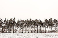 Tree Line<br />
