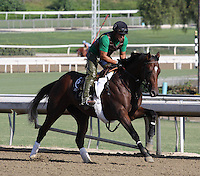 Know More out galloping for trainer Doug O'Neill at Santa Anita Park in Arcadia California