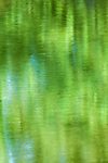 Green abstract of water reflection