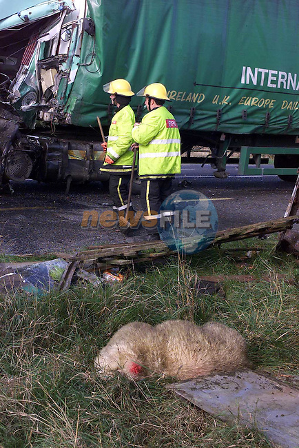 the scene of the truck crash with a dead sheep beside the truck.Pic Fran Caffrey Newsfile.©Newsfile Ltd