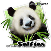 Howard, SELFIES, paintings+++++,GBHRPROV201,#Selfies#, EVERYDAY ,panda,pandas