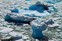 Blue ice from Glacier Perito Moreno floats in Lago Argentino.