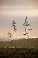 Trees remain from clearcut forest, Washington, USA