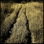 A track through long grass